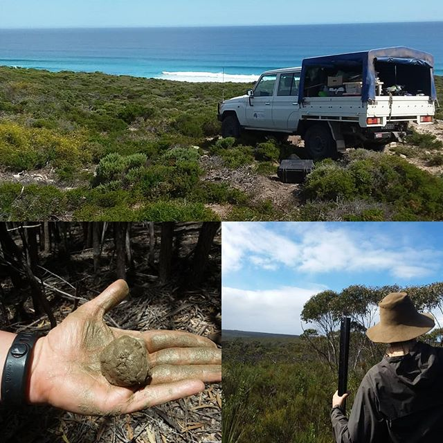 Last plot for the Kangaroo Island trip! We now have 12 new sites arcoss the island, from Flinders Chase NP to Lashmar CP #trythehoney
