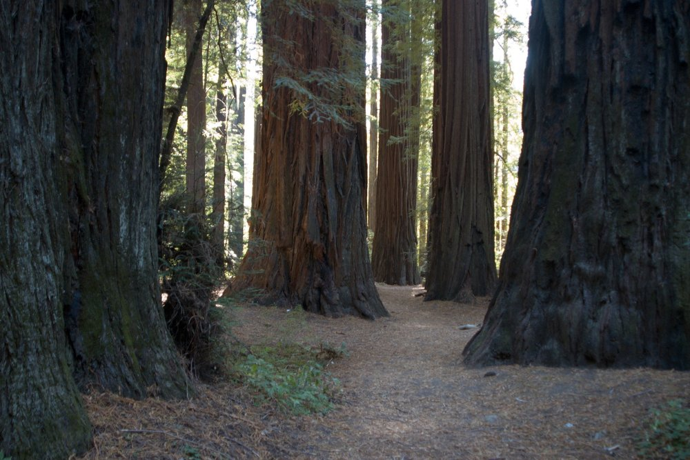 How to Get to Muir Woods - All the ways you can get to the redwoods outside of San Francisco.