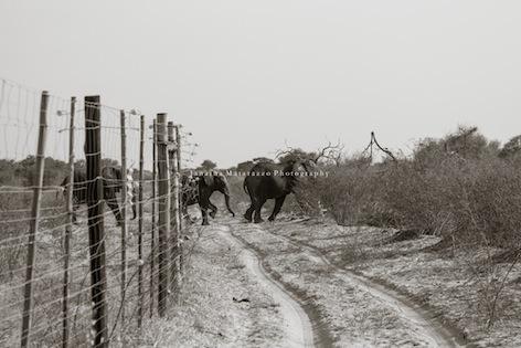 Janaina Matarazzo + fences Botswana-23.jpg