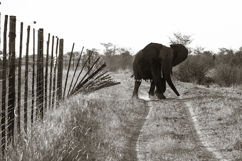 Janaina Matarazzo + fences Botswana-28.jpg