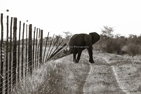 Janaina Matarazzo + fences Botswana-29.jpg