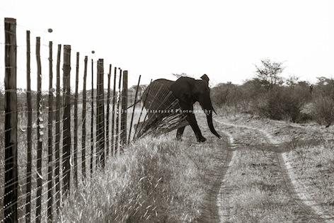 Janaina Matarazzo + fences Botswana-30.jpg