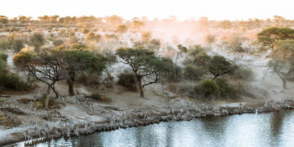 zebra migration landscape.jpg
