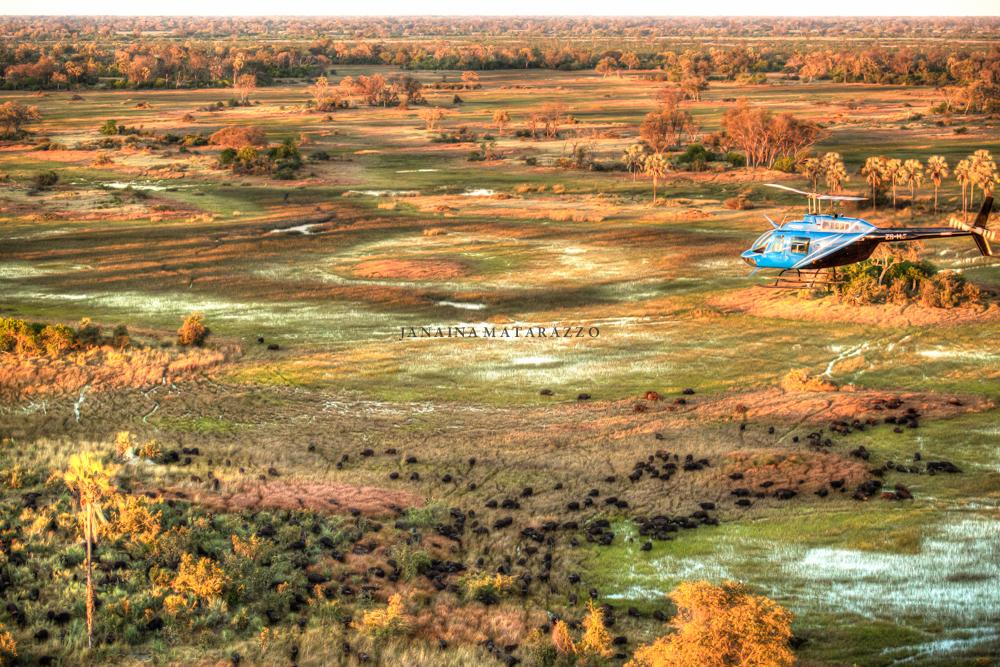 JMP_6352_helicopter.jpg