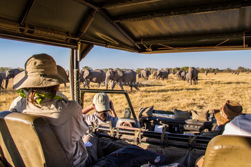 JMP_3708_safariadventure.jpg