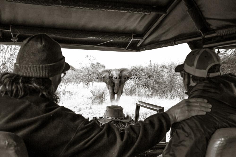 JMP_4553_safariadventure.jpg