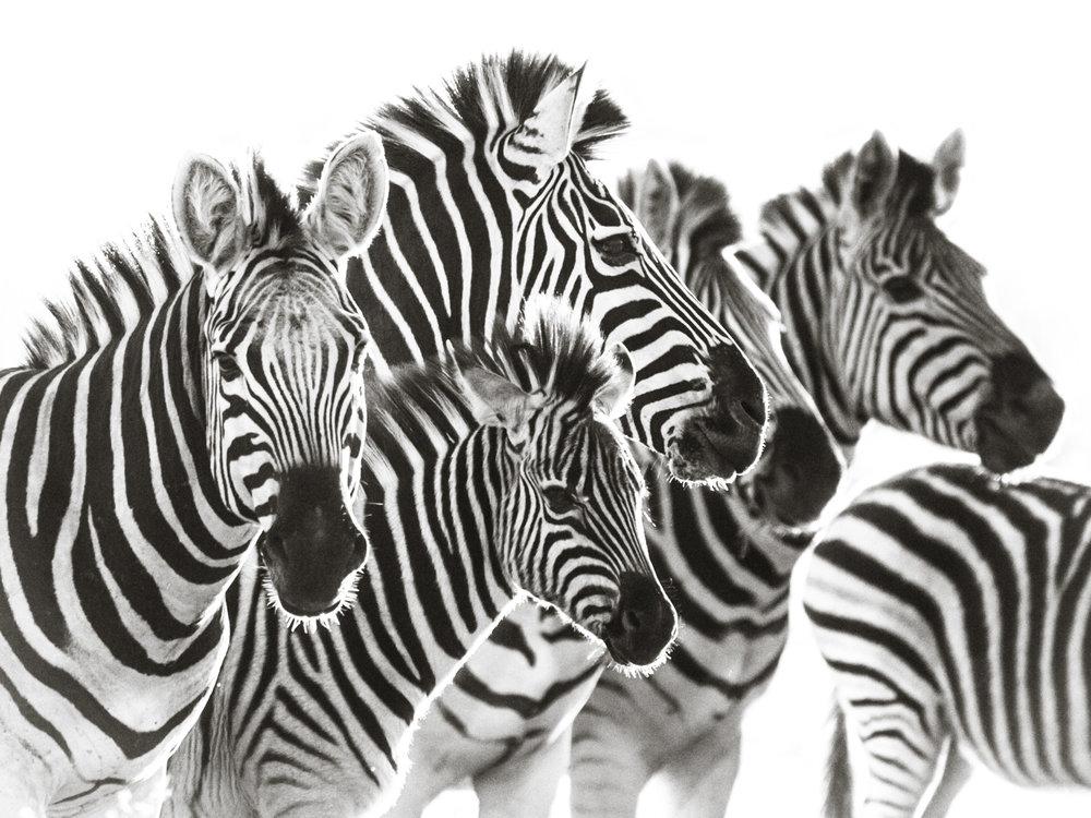janaina matarazzo_head and stripes_large_no watermark.jpg