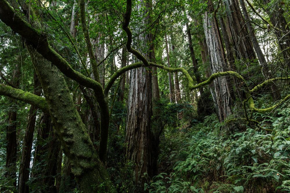 janaina matarazzo_green woods_large_no watermark.jpg