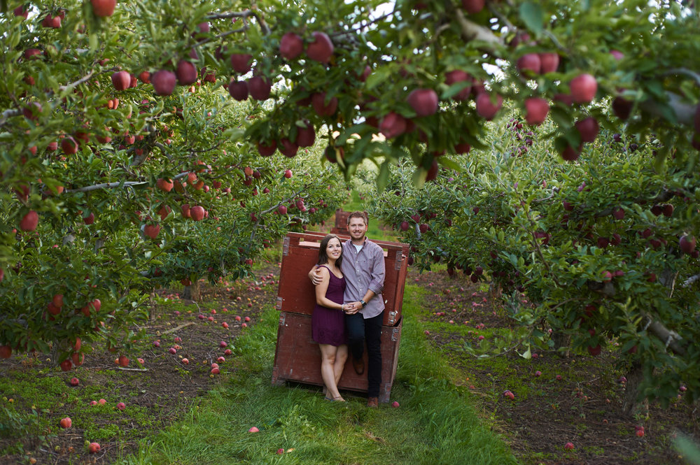 engaged couple in apple orchard