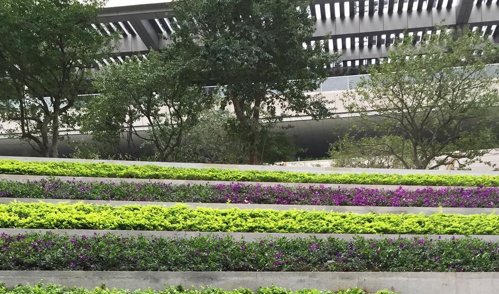ShenzhenBay2.jpg