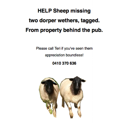 8:11am I placed the ad on the notice-board at the Post Office next to the one for the 'Missing Black Bull - branded' then I looked again up at the end of Luke Rd, tracked some poos that look like theirs at the top - then nothing. I wonder if they've been taken? Sheep-napped.
