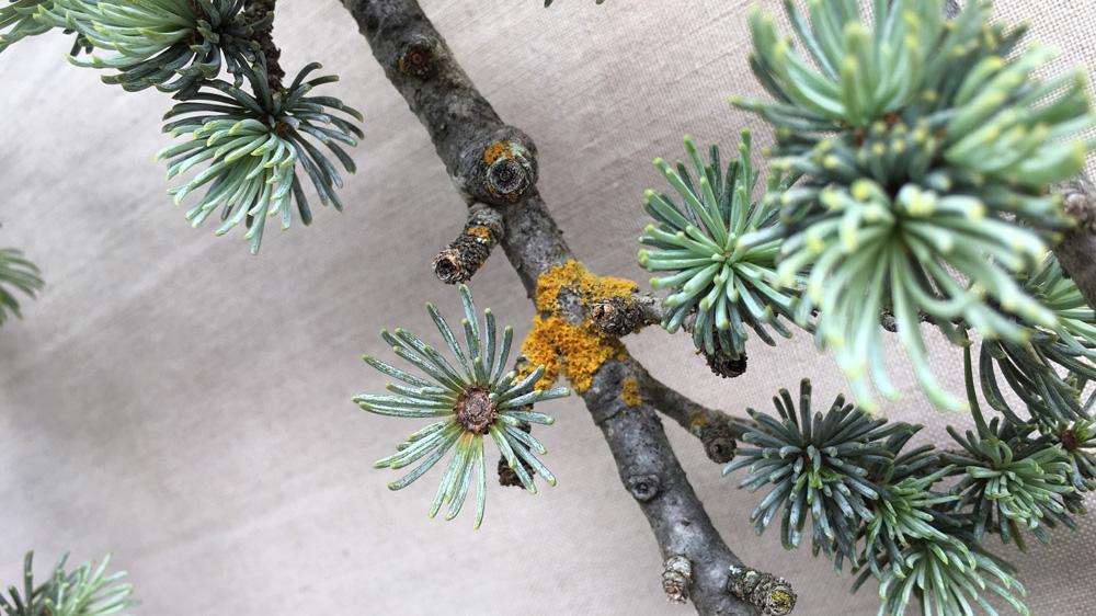 lichen5_538.jpg