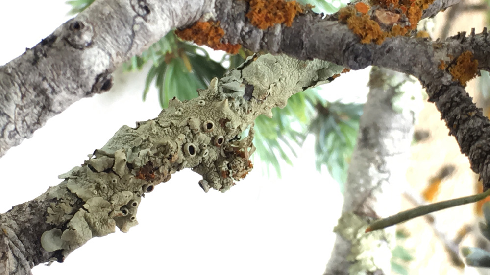 lichen1.jpg