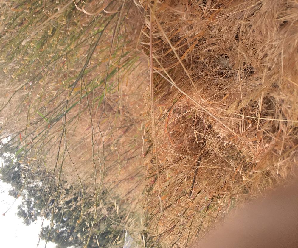 grass5629.jpg