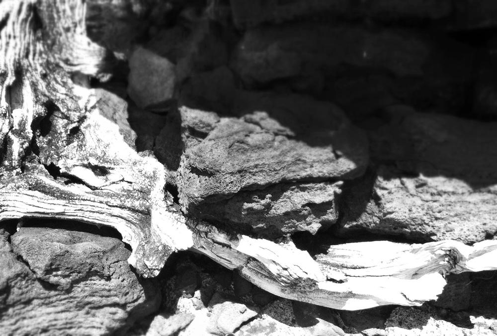 Wood and Lava.JPG