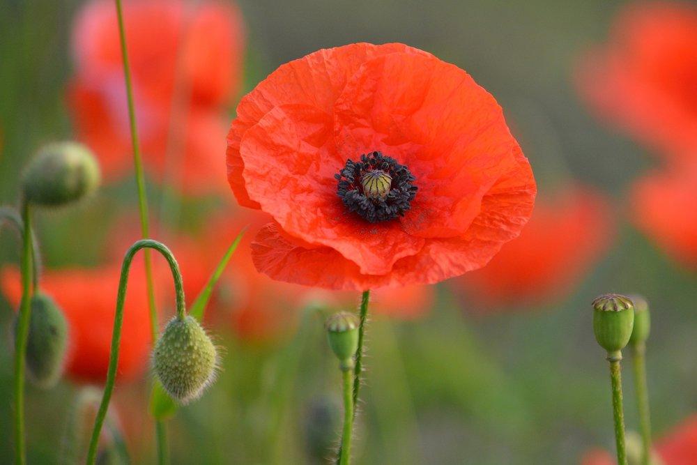 flower-e831b50621_1920.jpg