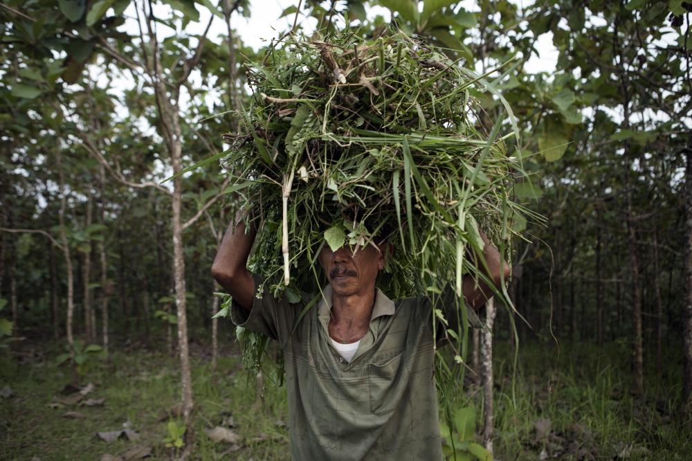 Villager of mount Kemukus collecting weeds.