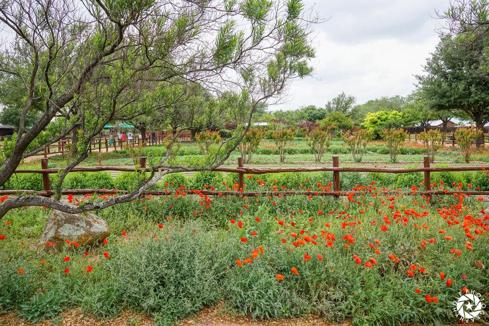 Wildseed Farms outside Fredericksburg, Texas.