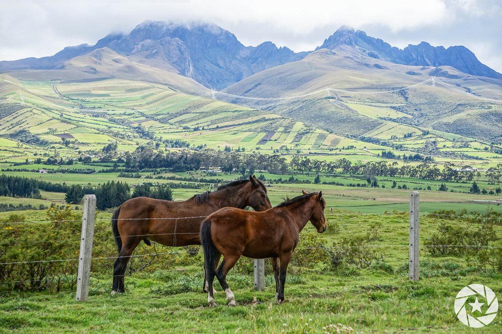 Cotopaxi-Ecuador-Horses.jpg
