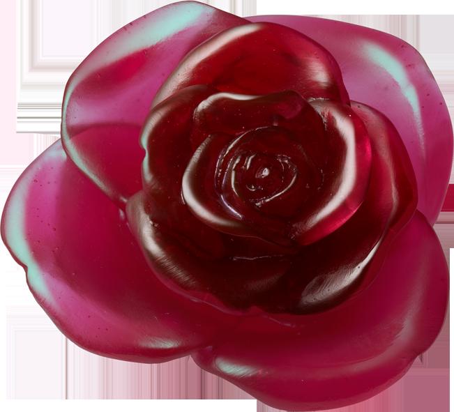 Rose Passion Flower Daum