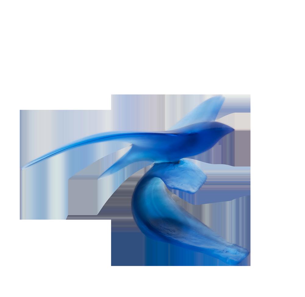 Oiseau marin by Xavier Carnoy 05608.png