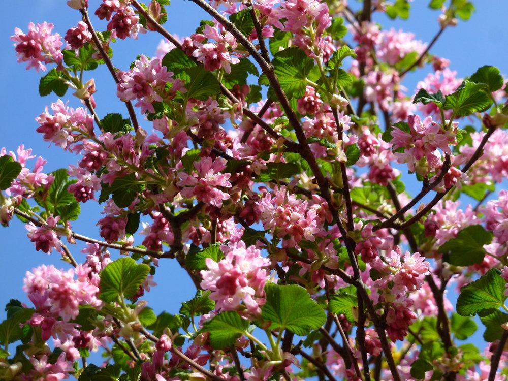 Sophie  Dreisbach_Le ciel bleu  regarder au delà des difficultés à travers le rose des fleurs (le cancer) apercevoir le ciel bleu et l'espoir.jpg