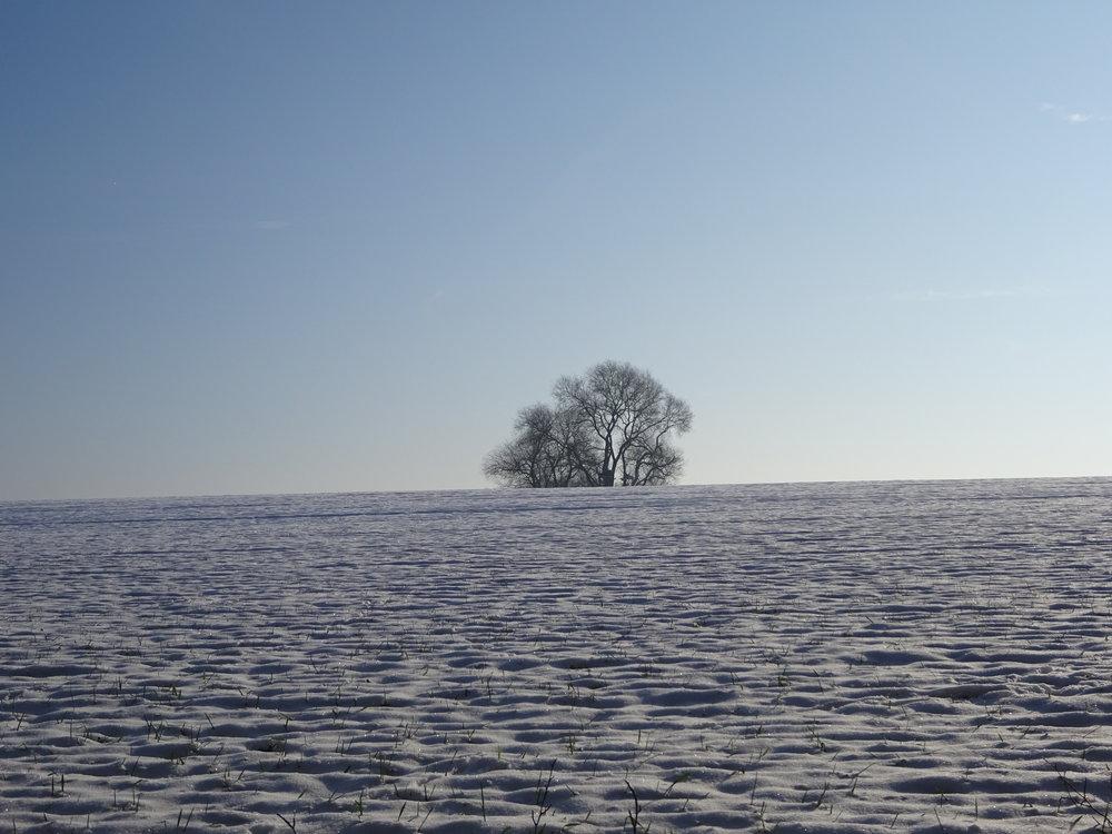 Au cœur de chaque hiver palpite un printemps et derrière le voile de chaque nuit se trouve un matin radieux. (Khalil Gibran)   Photo: Marie-France