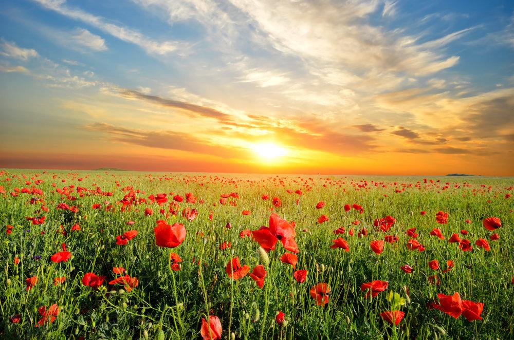 « Gardez votre visage toujours vers le soleil et les ombres tomberont derrière vous.» (Walt Whitman)