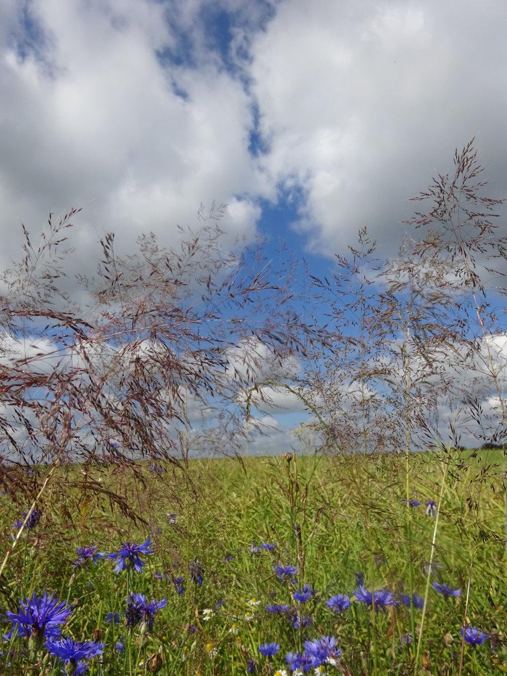 - Si la vie n'est qu'un passage, sur ce passage au moins semons des fleurs. (Michel de Montaigne)