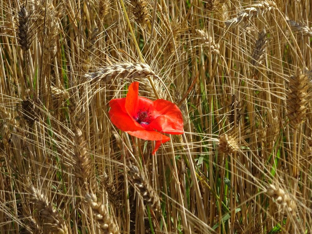 - Un simple regard posé sur une fleur et voilà une journée remplie de bonheur. (Céline Blondeau)