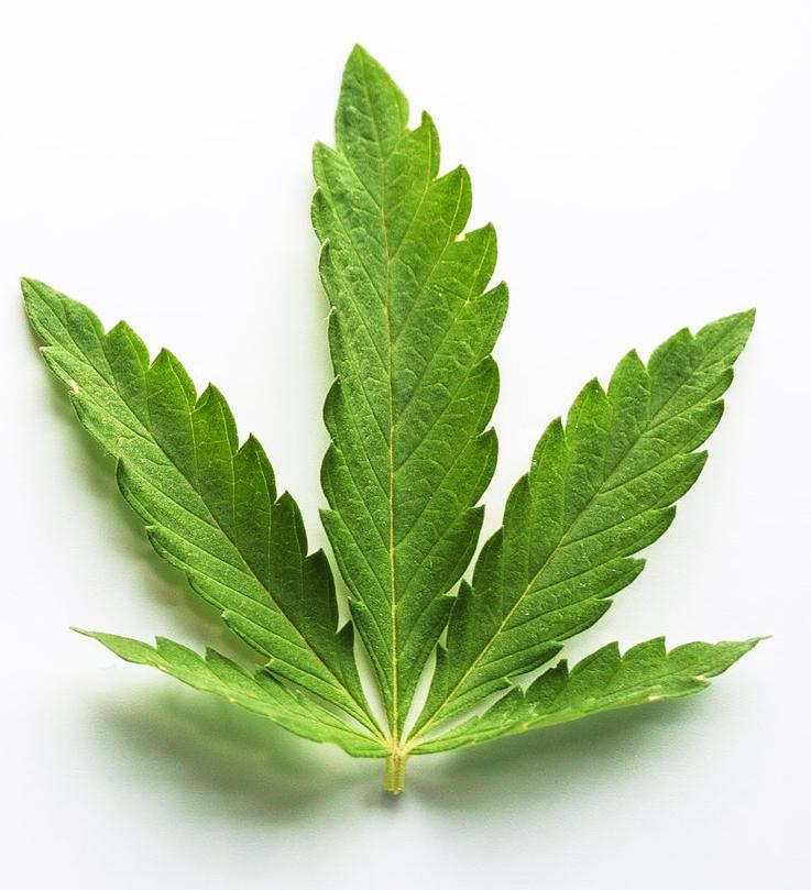 - Le cannabis est un thème très actuel , comme au congrès de juin 2018 au MASCC annual meeting on supportive care in cancer à Vienne.Est-ce que le Chanvre est la thérapeutique du futur ?