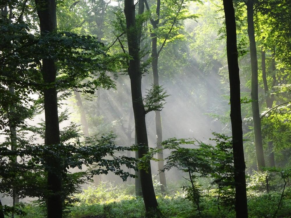- L'esprit ne regarde ni en avant, ni en arrière. Le présent seul est notre bonheur. ( Goethe)