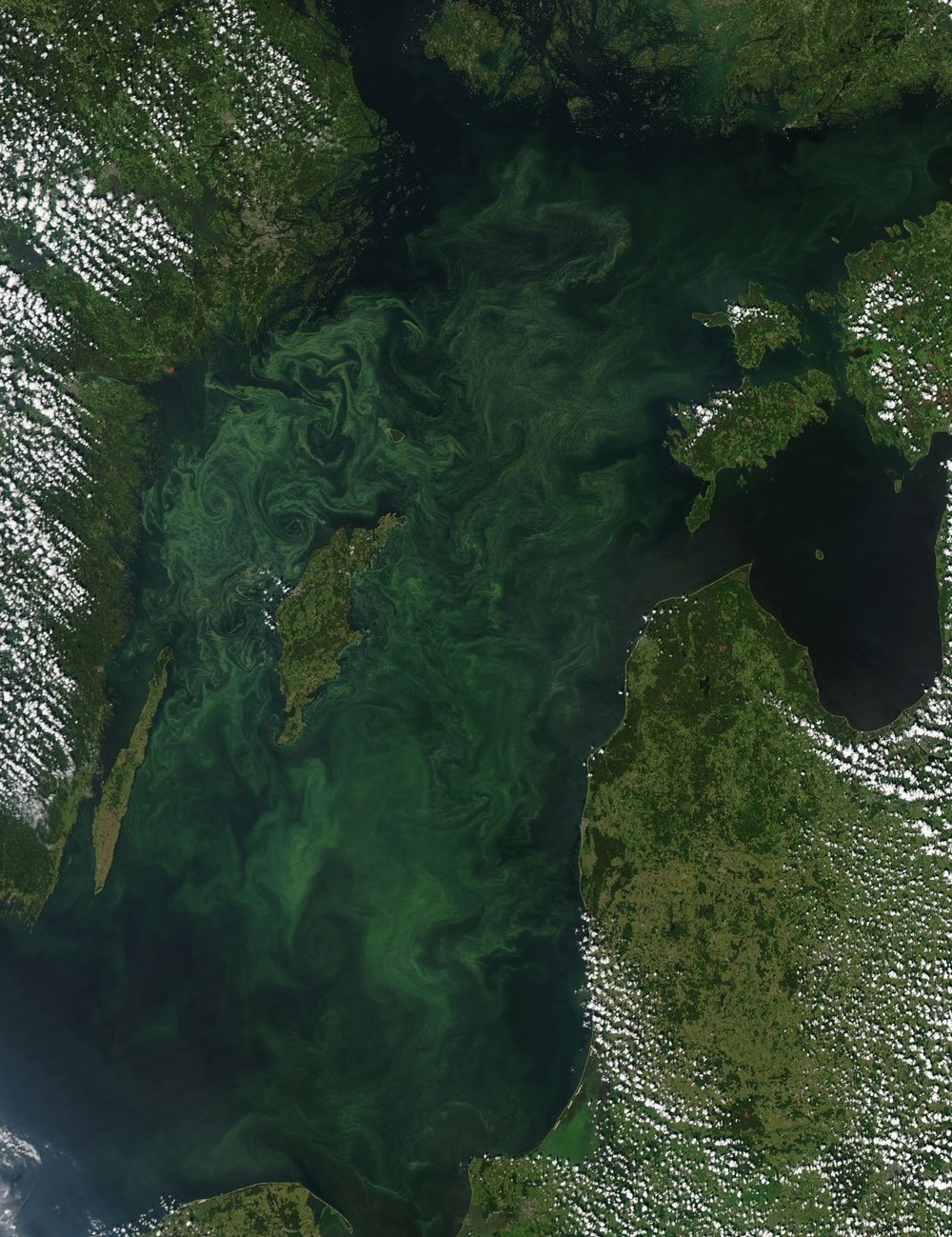 Satellite image of toxic algal blooms in Baltic Sea (Source: NASA)