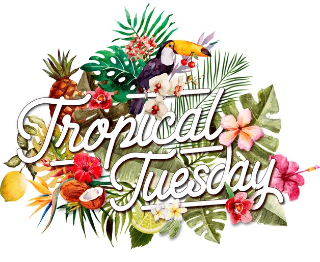 Tropical Tuesday.jpg
