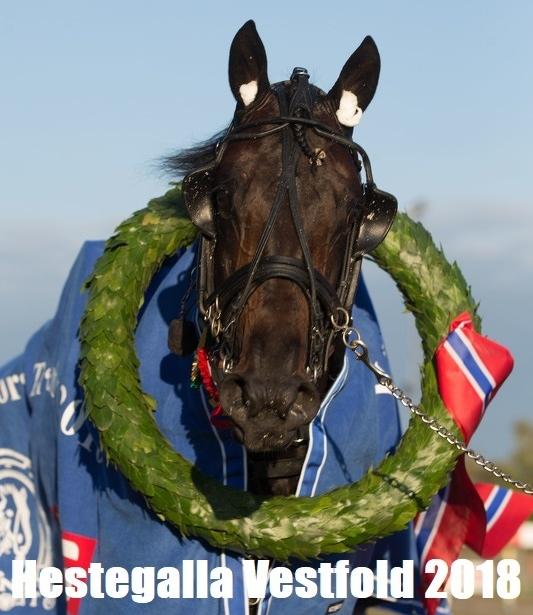 Hestegalla.jpg