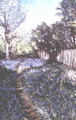 normal_bluebell-path350~0.jpg
