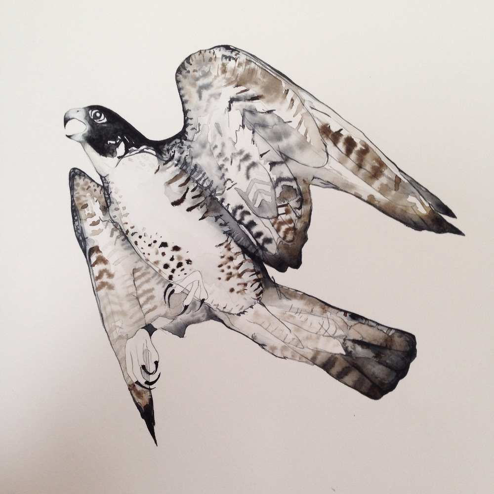 Bird of prey watercolour sketch by Lindsay McDonagh