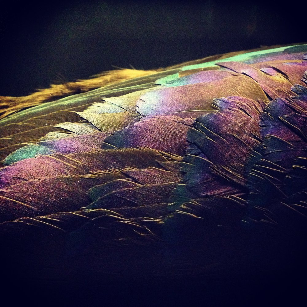 Feather colours at The Natural History Museum by Lindsay McDonagh