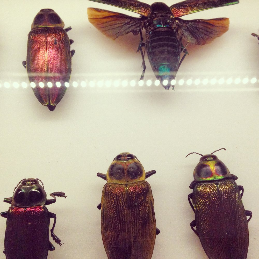 Exhibition bugs at the Natural History Museum by Lindsay McDonagh