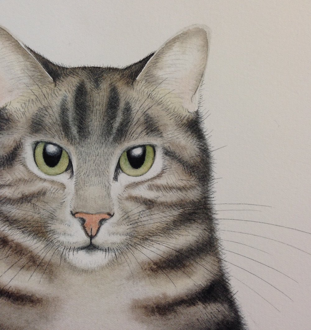 Tom Cat watercolour detail by Lindsay McDonagh