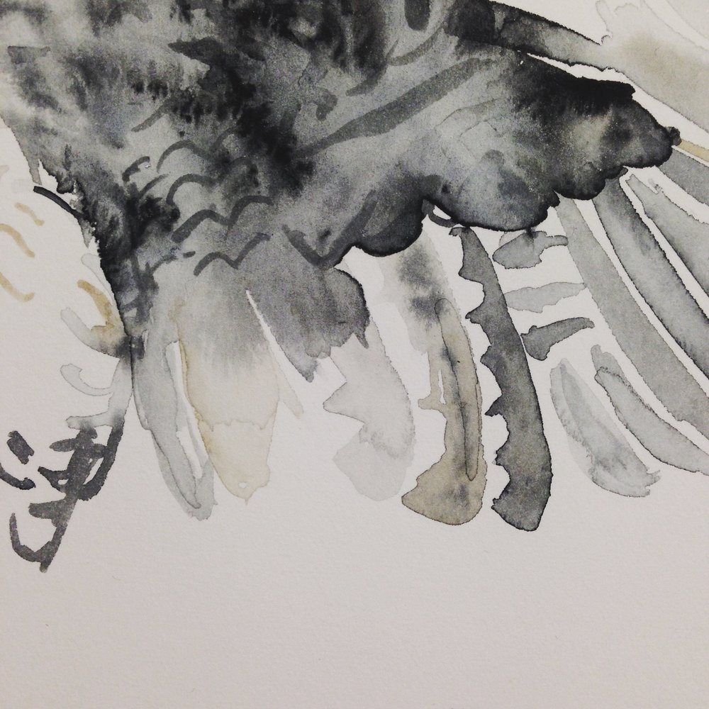 Watercolour experiments of bird wing by Lindsay McDonagh