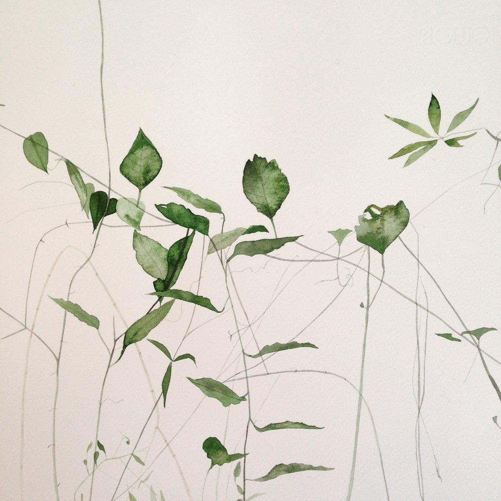 Leaves, original watercolour by Lindsay McDonah