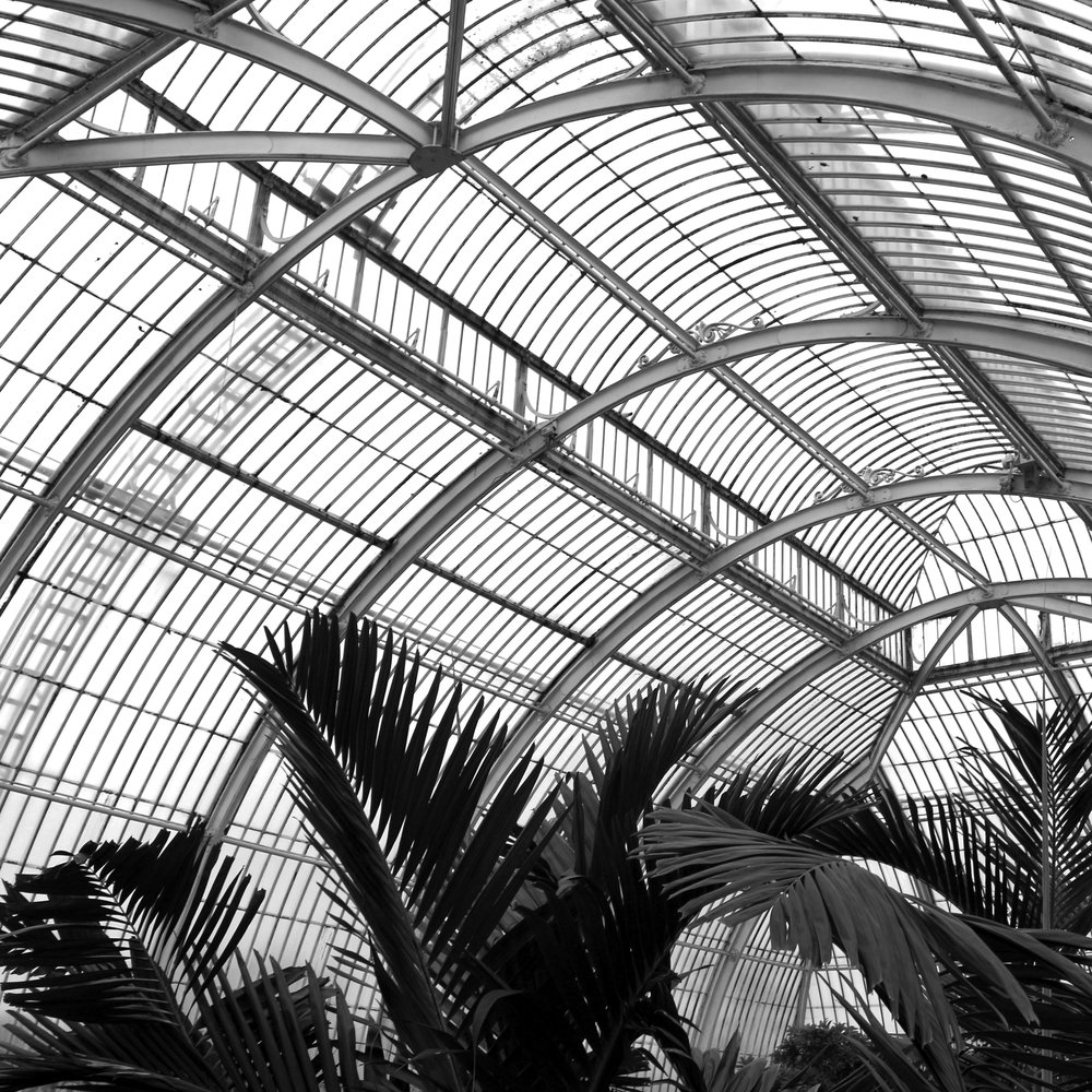 Palms at Kew, see lots more photos at:  https://www.flickr.com/photos/lindsaymcdonagh/albums/72157678929216824
