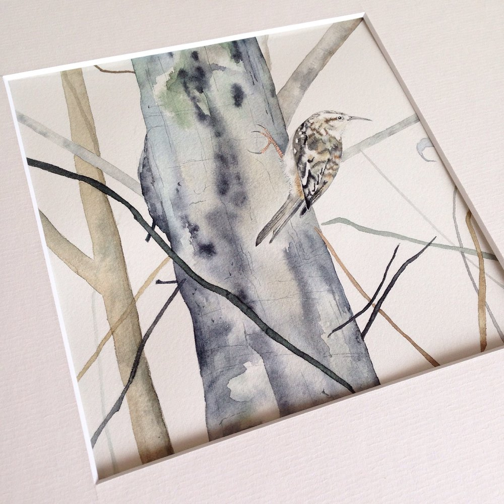 Tree Creeper watercolour by Lindsay McDonagh