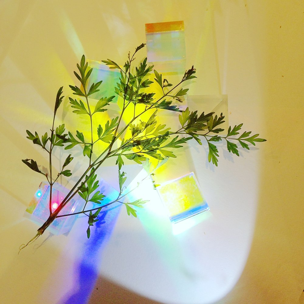 Plant spectrum. Photo by Lindsay McDonagh