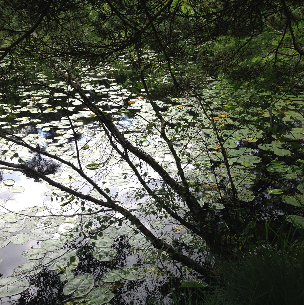 Lily pond reflections. Photo by Lindsay McDonagh