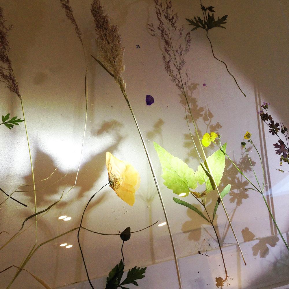 plant light 2.jpg