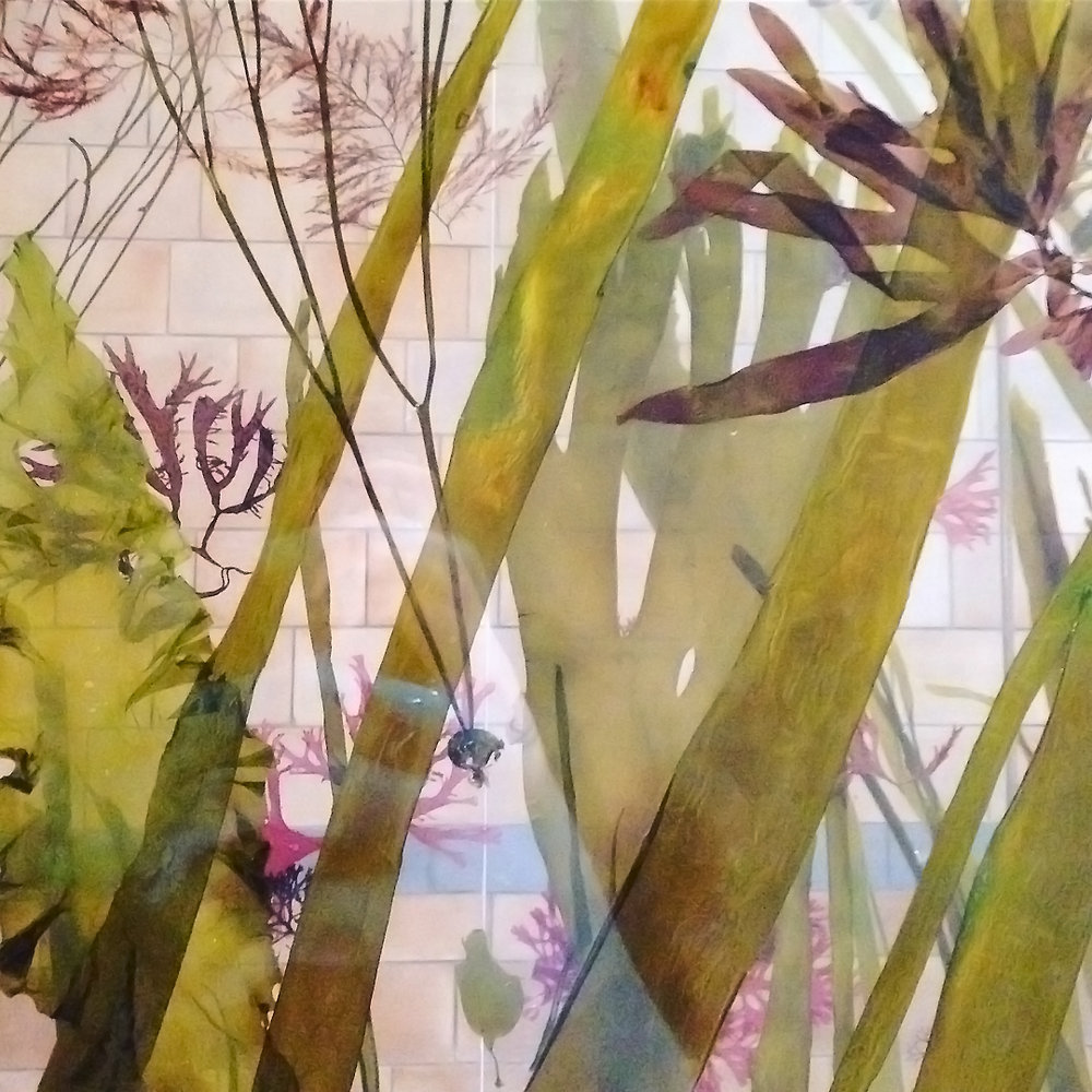 Seaweed photograph by Lindsay McDonagh