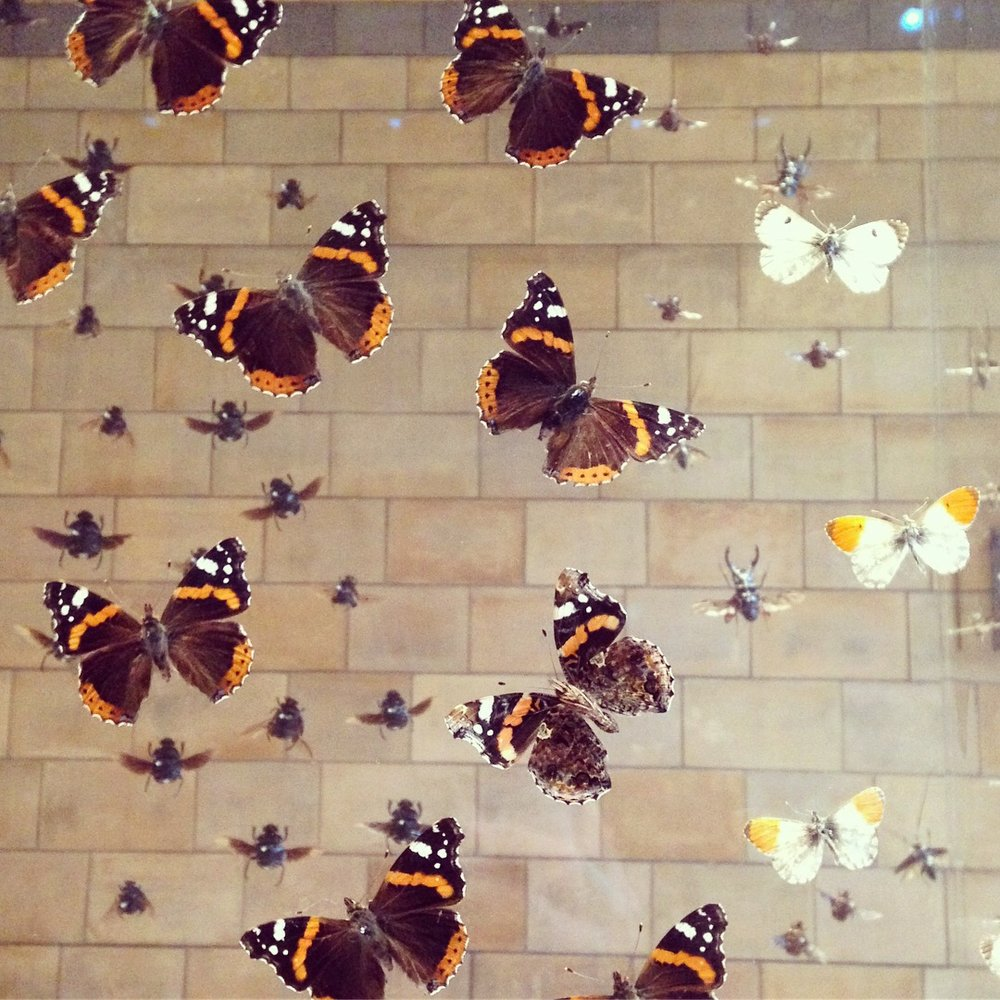 Butterflies photograph by Lindsay McDonagh