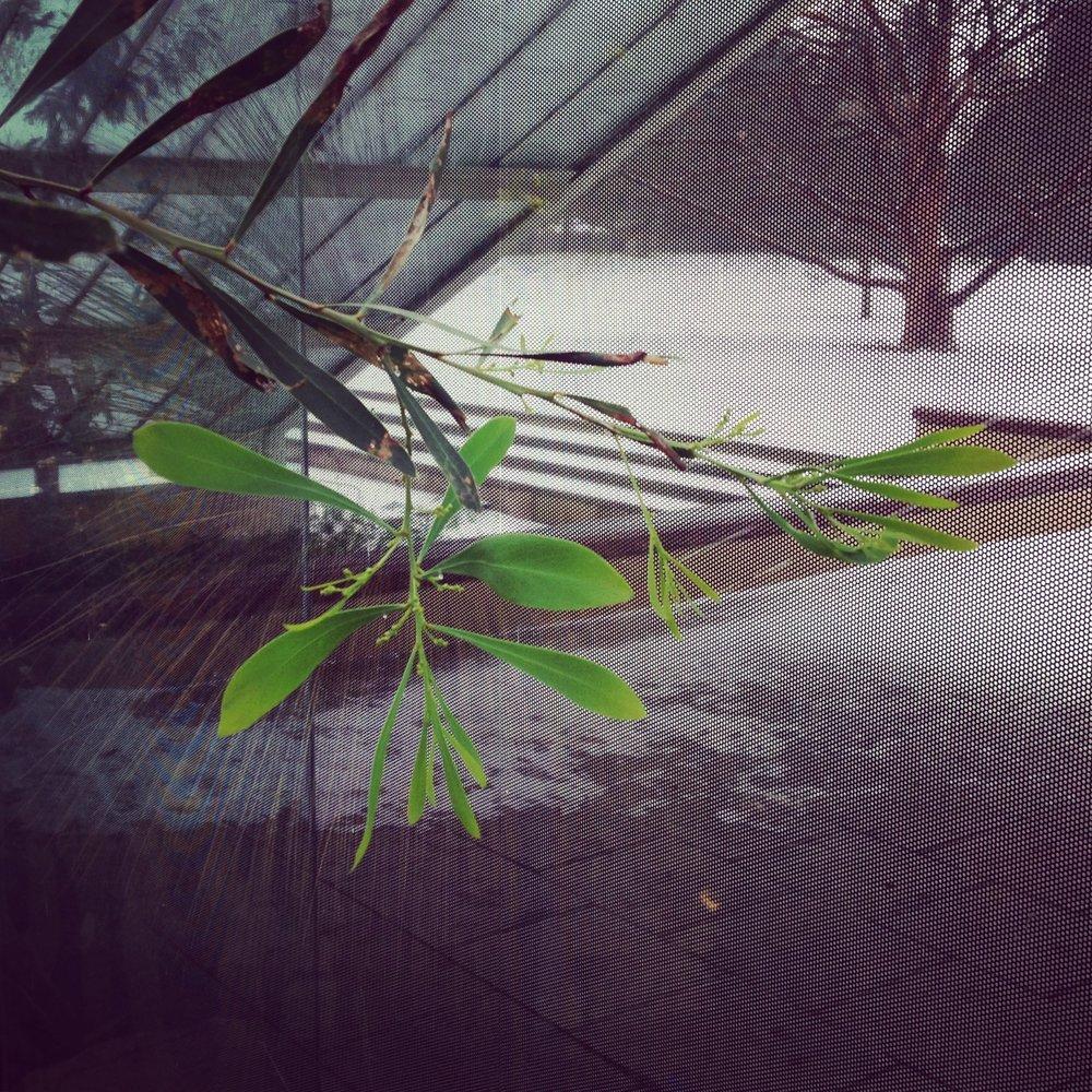 Lindsay McDonagh Plant at Kew Gardens